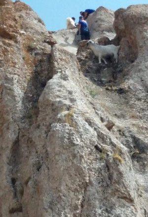 Afad'tan Taşlıçay'da Keçi Kurtarma Operasyonu