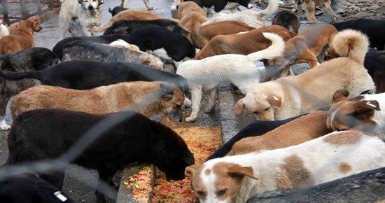 Doğubayazıt Belediyesi Sahipsiz Sokak Hayvanları Sahiplendi