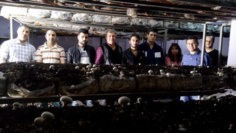 Ağrı'da Kültür Mantarı Yetiştiriciliği Kursu Düzenlendi