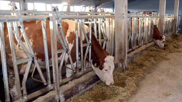 Et ve Süt Kurumundan Besicilere Müjde