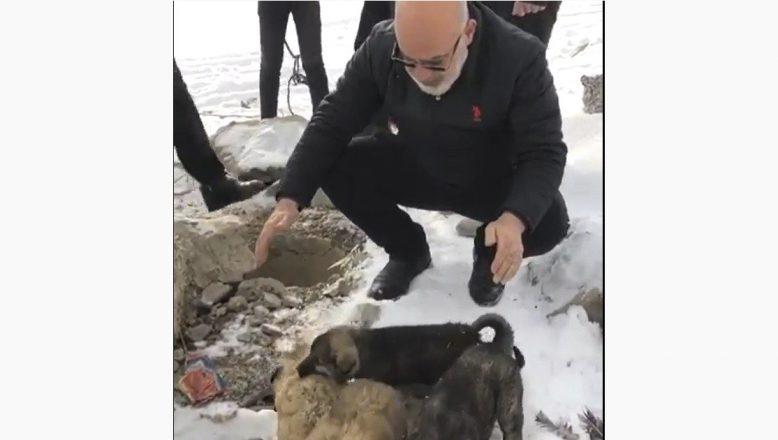 Ağrı'da su kuyusuna düşen yavru köpekleri itfaiye ekipleri kurtardı