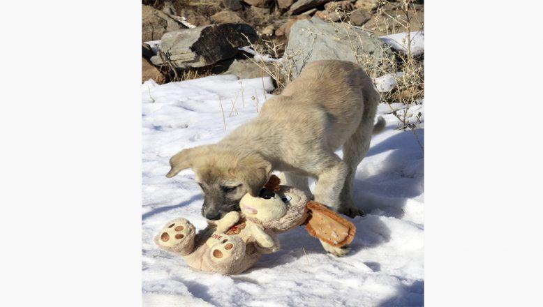 Oyuncağını kapan köpek yavrusuyla tatlı mücadele