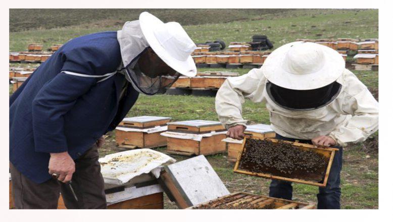 Ağrı'da; Arıcılar bal üretimi için dağlık alanlarda konaklamaya başladı