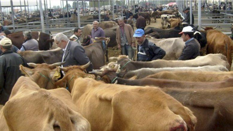 Ağrı'da hayvan pazarları haftanın 5 günü açık kalacak