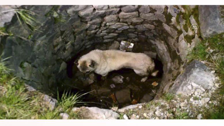 Ağrı'da Kuyuya Düşen Köpeği İtfaiye İki Kez Kurtardı
