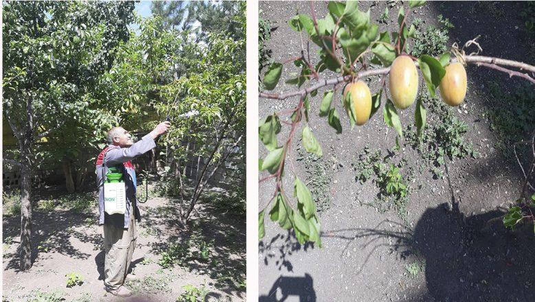 Ağrı'da, Çorak Bir Bahçenin Muhteşem Meyve Bahçesine Dönüşüm Başarısı!