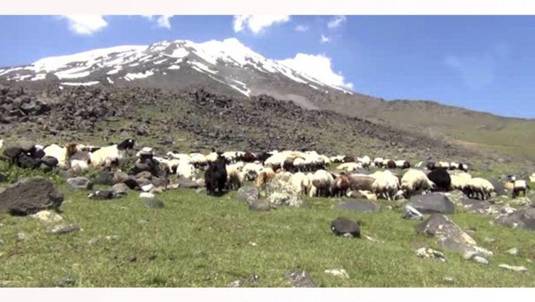 Ağrı Dağı'nda çöl ve kutup iklimi aynı anda yaşanıyor