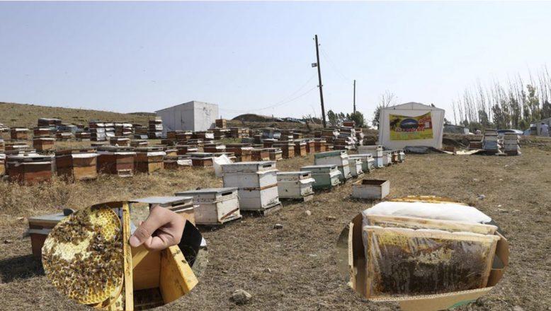 2020 Yılı Arılı Kovan Destekleme ve Damızlık Ana Arı Destekleme Başvuruları Başladı!