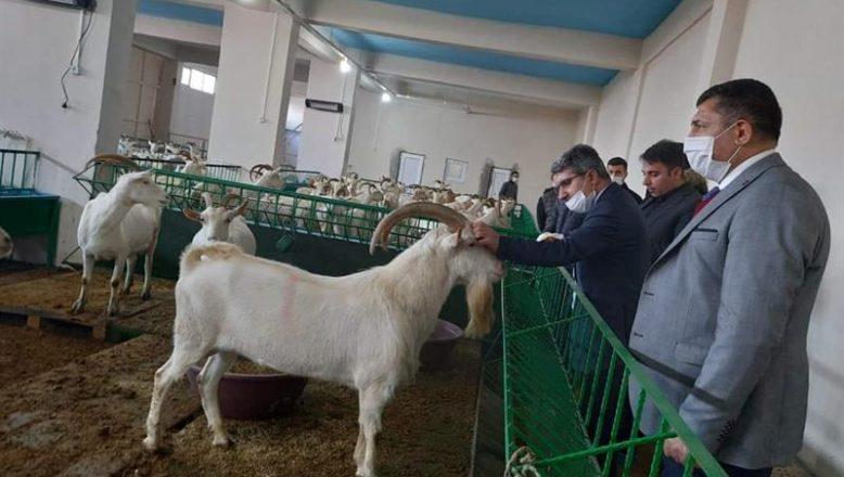 İl Tarım Müdürü Engin, Doğubayazıt'ta tarım işletmelerini ziyaret etti