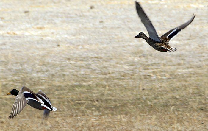 Ağrı Dağı Milli Parkı, Göçmen Kuşlarla Renklendi