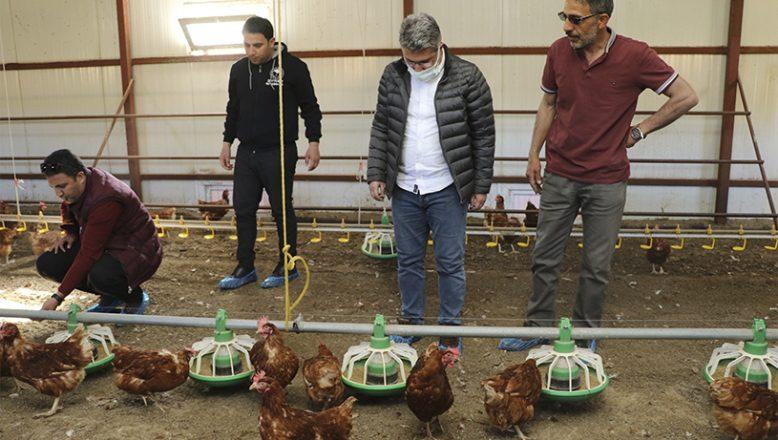 Ağrı İl Tarım ve Orman Müdürü Engin,Yumurtacı Tavuk Çiftliğini Ziyaret Etti