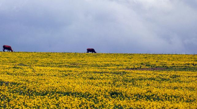 Ağrı Kırsalı Rengarenk Çiçek Açtı