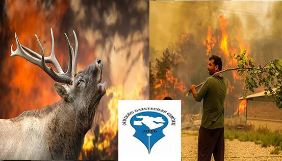 OGC'DEN Orman Yangınlarına İlişkin Kınama
