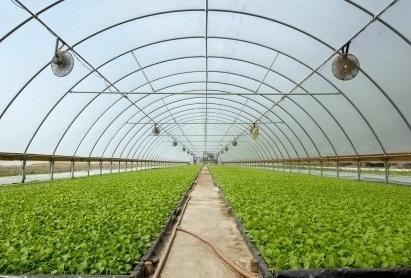 Ağrı'da 860 dönüm alanda örtü altı üretime başlanacak